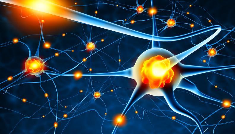 Diplomlehrgang Neuromentaltrainer/in®