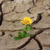 Resilienz - Das Geheimnis der inneren Stärke